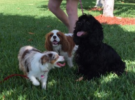 Me with friends, Gracie and Halle